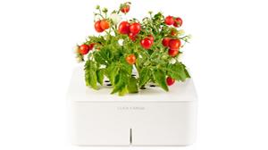 Beitragsbild ClickandGrow - Automatische Pflege der Pflanzen