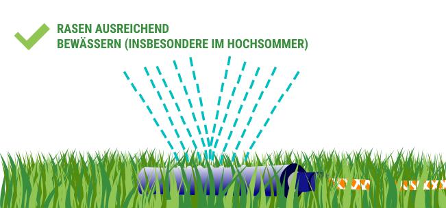 Rasen bewässern perfekter Rasen mit Rasenroboter