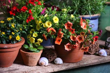 Blütenpracht in Tontöpfen