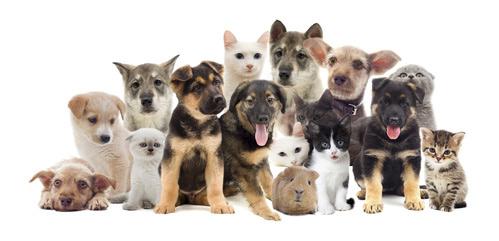 Saugroboter für Hund und Katze