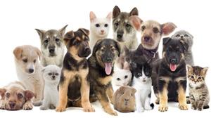 """Beitragsbild Hund, Katze, Maus """"…"""" Staubsaugerroboter im Haustier Haushalt."""