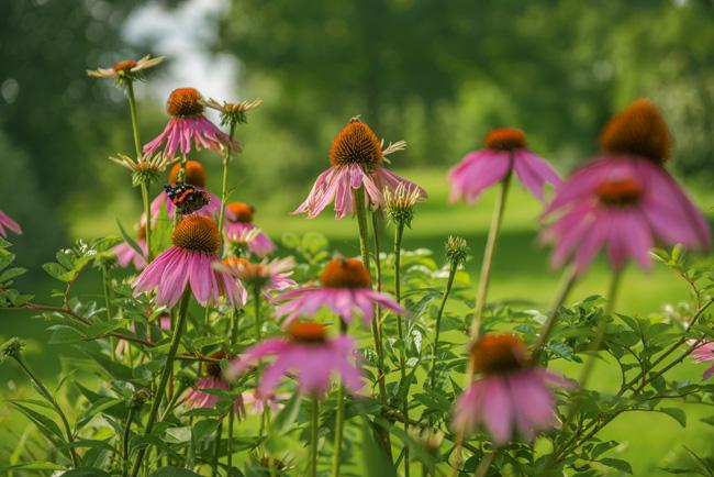 Wolf Garten Blumen