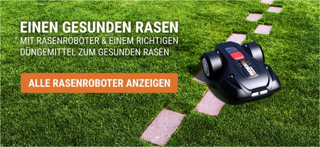 Düngen für gesunden Rasen mit Rasenroboter