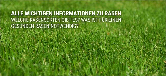 Info zu Rasen grün